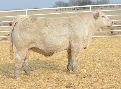 Dismukes Ranch Cattle For Sale - Tag 1545